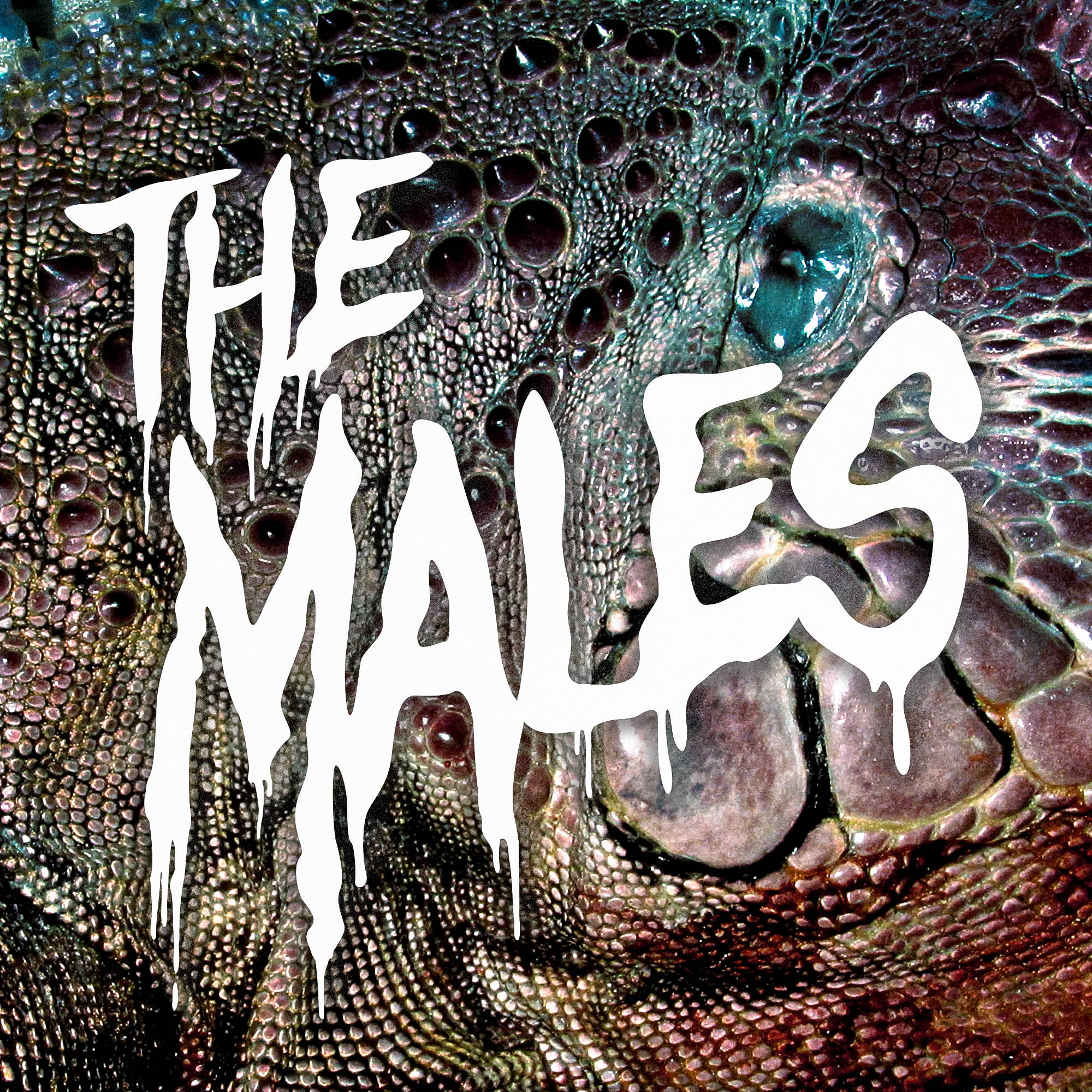 THE MALES EP MASTER